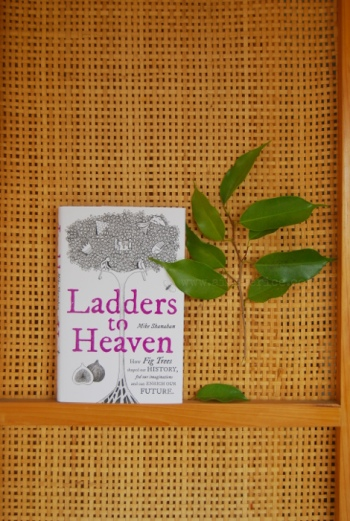 ladders-cover-vertical